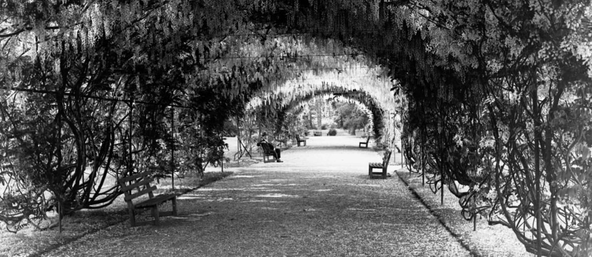 Image: Botanic Gardens