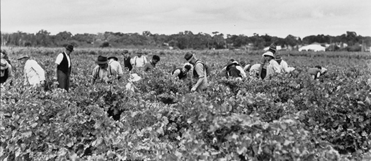 Image: people in vineyard