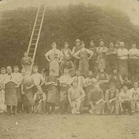 Image: A large group of men in working clothes, some wearing aprons, pose for a photograph in front of a ladder leaning on a large stack of wattle bark. To the right of the photograph, one man kneels holding a small dog.