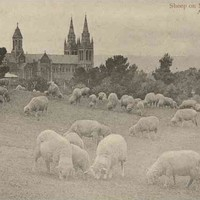 Image: sheep graze on a gentle slope in front of a cathedral.