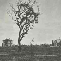 Image: An open field with a single tree bordered by four historic buildings