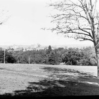 Image: the view of a city rising above the tree tops as seen from a low hill