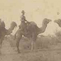 Image: A man with a wide-brimmed hat sits astride a camel in scrubby outback terrain. Three other camels with packs on their backs stand nearby