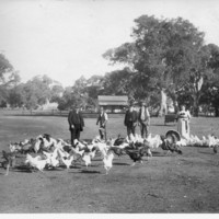 Image: four people with chickens