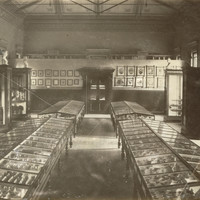 Image: Museum interior with wooden cabinets and marble busts
