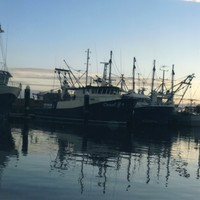 Image: A row of fishing boats docked at sunset