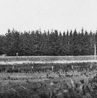Image: a panoramic view of a pine forest