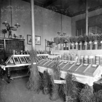 Image: plants and grains in jars and display cabinets