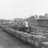 Image: Several train cars full of sacks are parked on a long wharf. A steam locomotive is positioned within the midst of the train cars. Three large stone buildings are visible in the background
