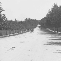 Image: Black and white photograph of a wide, tree lined street with horse drawn carriages in the distance