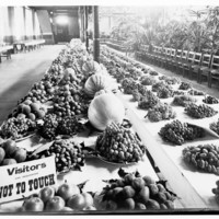 Image: Two long tables of fruits and nuts on display in an exhibition building. There is a small sign on the table requesting visitors to not touch the fruit and nuts. There is also a long line of chairs next to the tables.