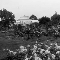 Image: Palm House and rose garden