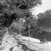 Image: Black and white photo of an early 1900's road through a gorge, a man is travelling on a horse-drawn cart.