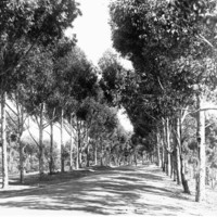 Image: view of avenue of trees
