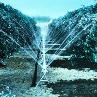 Image: Orchard sprinkler