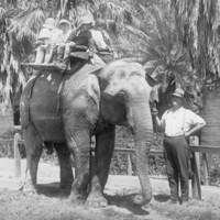 Image: Elephant ride at Zoological Gardens