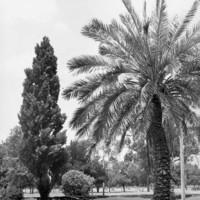 Image: Osmond Gardens