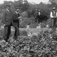 Image: River Murray vegetable garden