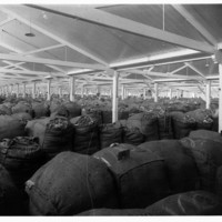 Image: Bags of wool fill a large hall at Port Adelaide
