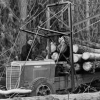 Image: Logging truck