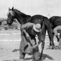 MAADI, EGYPT. 1915. Two Australian Light Horse farriers shoeing horses