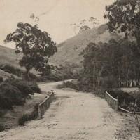Image: empty dirt road over bridge through gum trees