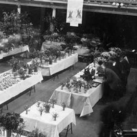 Image: A man examines flowers at a table in a large open hall