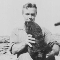 Image: A young clean-shaven Caucasian man in 1940s-era coveralls holds a young live fur seal in his arms. Part of an unidentified automobile is visible immediately behind the man