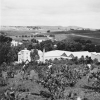 Aerial view of Seppeltsfield winery and vineyard, Barossa District