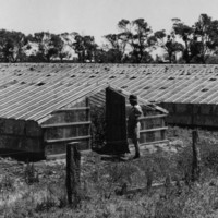 Image: A man stands in front of a row of greenhouses in an open field. A windmill is visible in the distant background