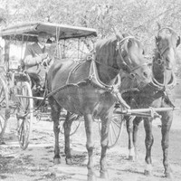 Image: man sitting alone in a buggy drawn by two horses