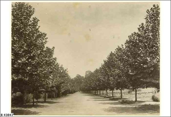 Image: a pathway lined with trees