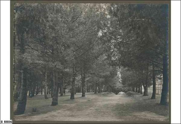 Image: Dense forest in Botanic Park