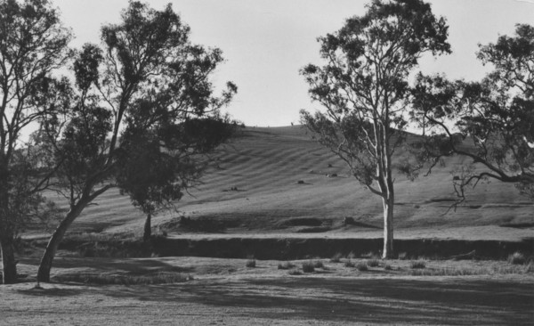 Image: trees with furrowed land in distance