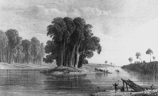 Image: Drawing of river with small vegetated island in its centre. Indigenous Australians stand on the right river bank, on the island and by a small shelter in the foreground. A small canoe travels along the water to the right of the picture.