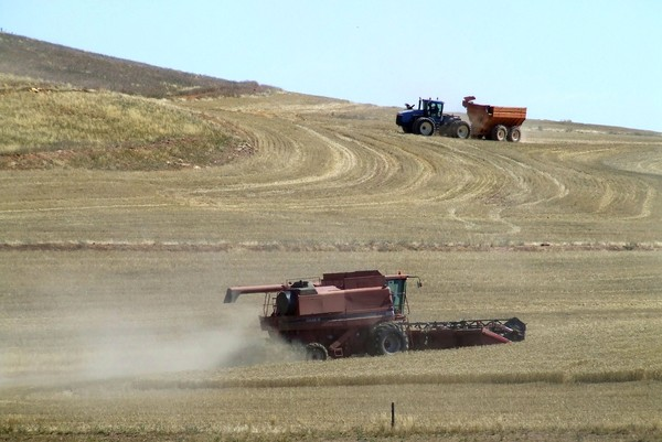 Image: Wheat field with harvesters