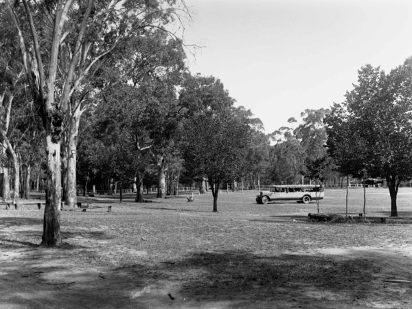 Image: Old tourist bus near gum trees