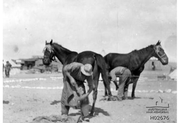 MAADI, EGYPT. 1915. Two Australian Light Horse farriers shoeing horses