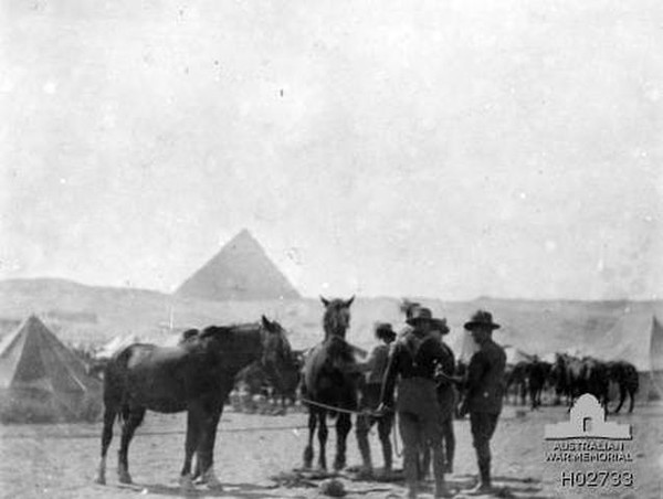 Image: Horses being shod in Egypt, a pyramid can be seen in the background