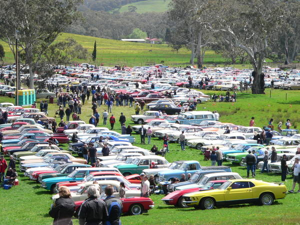 Image: large group of cars in multiple lines on grassed area