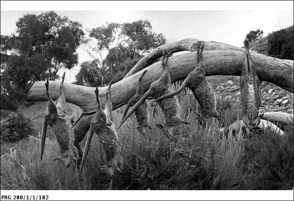 Image: Dead Tamar wallabies