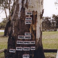 Image: A tall gum tree stands near the bank of a river, which is visible in the distant background. The trunk of the tree is adorned with several small signs showing the year in which a major flood occurred and its water level height
