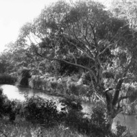 Image: view of creek and trees