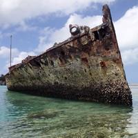 Image: Protector at Heron Island, 2013