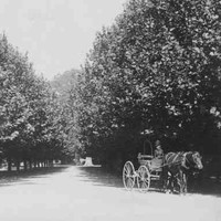 Image: woman driving horse and buggy in park