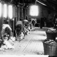 Image: men shearing sheep