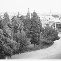 Image: view of trees surrounded by buildings