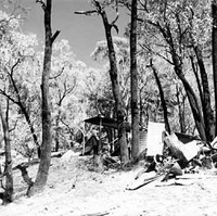 Image: Burnt out building and trees